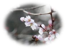 Tama-shinrin.jpg