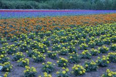 Hokkaido9_04.JPG